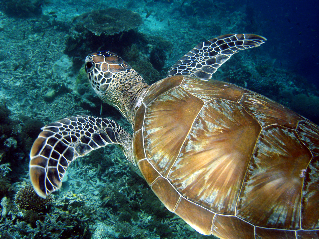 Top 5 Reasons to Volunteer with Sea Turtles in Malaysia
