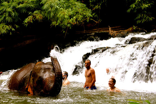 2 Day Elephant Sanctuary & Jungle Trek Tour, Cambodia