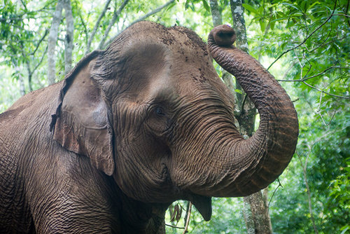 1 Day Elephant Sanctuary Adventure Tour, Cambodia