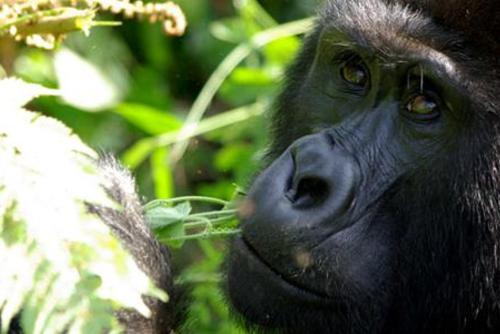 Gorilla Trekking Independent Adventure