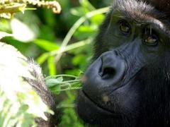Gorilla Trekking Holiday