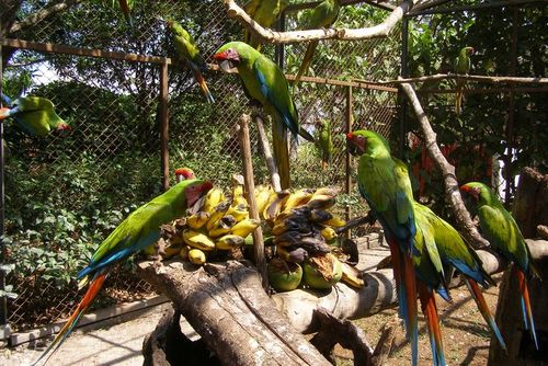 Volunteer in Costa Rica with Wildlife Rescure Program - from just $38 per day!