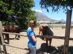 Volunteer in South Africa with Animal Rescue Program - from just $23 per day!
