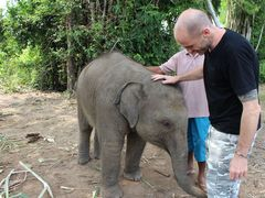 Volunteer in Thailand with The Elephant Village Program - from just $63 per day!