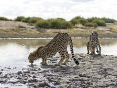Namibian Wildlife Sanctuary
