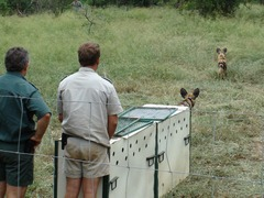 Zululand Wildlife Conservation