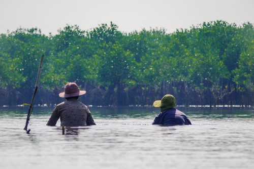 Mangrove Conservation Project in Kampot, Cambodia