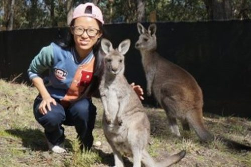 Wild Animal Rescue in Australia