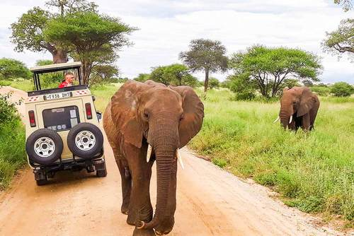 Safari Tours