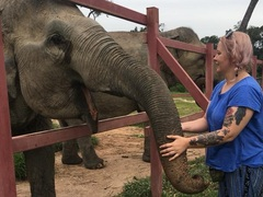Animal Welfare in Cambodia & How You Can Help