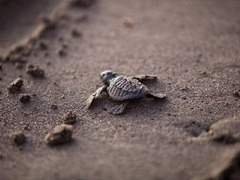 Sea Turtle Conservation Projects in Bali, Indonesia from US$320