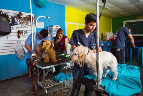 Animal Care Volunteer Work in Guatemala from US$310