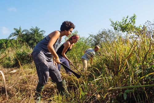 Agriculture Program in Ghana from US$270
