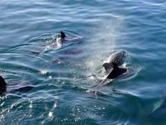 Best Places & Times of Year to Swim with Dolphins