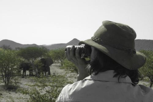 Elephant conservation and building in Namibia