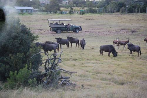 Big 5 conservation experience in South Africa