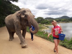 Volunteer at an elephant sanctuary in Thailand