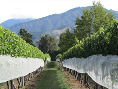 Best Wine Vinyards to Visit in New Zealand