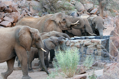 Volunteering in Namibia – Protecting Endangered Desert Elephants