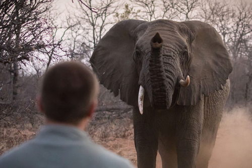 Professional Field Guide Course – Become a Ranger in Southern Africa