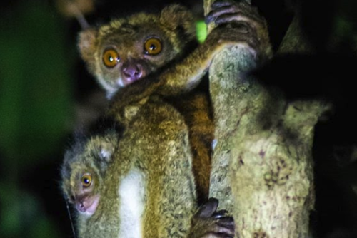Volunteer on a Wildlife Conservation Project in Madagascar from £180 with PMGY