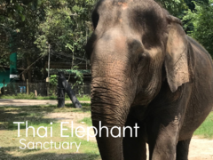 Thai Elephant Sanctuary