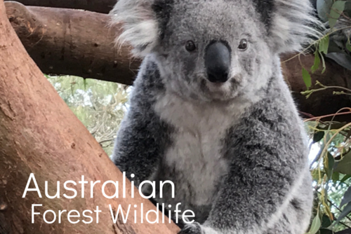 Australian Forest Wildlife. Sanctuary for Injured Wildlife & Birds