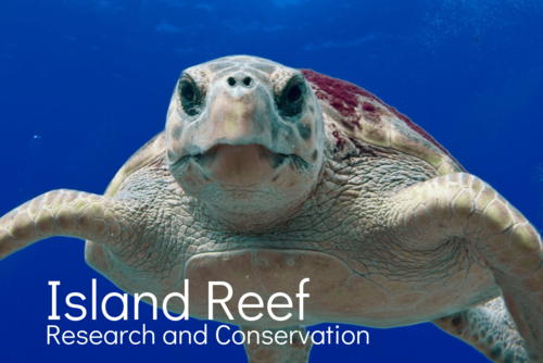 Island Reef Research and Conservation