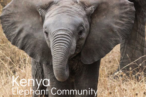 Kenya Elephant Community
