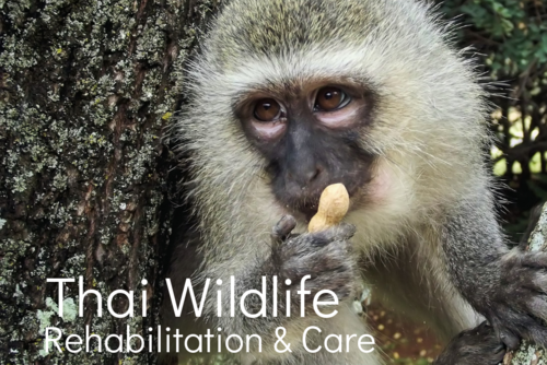 Thai Wildlife Rehabilitation & Care