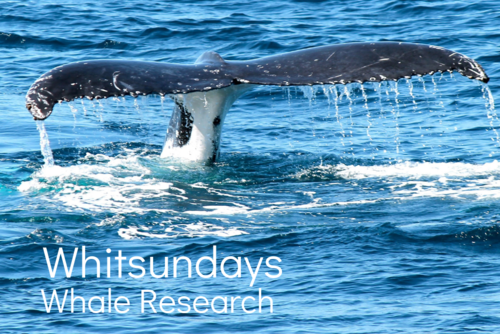 Whitsundays Whale Research
