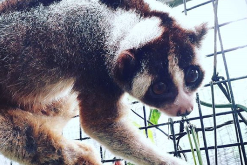 Wildlife Volunteering in Bali from £180 with PMGY