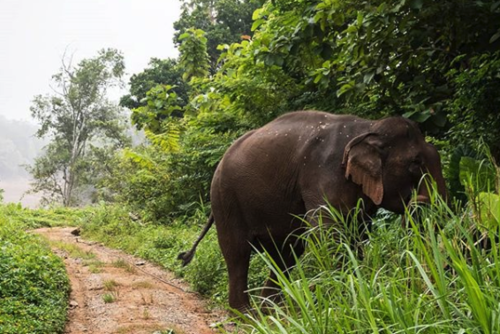 Elephant Conservation Volunteering in Sri Lanka from £440 with PMGY