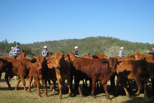 Cattle Station Jobs in Australia