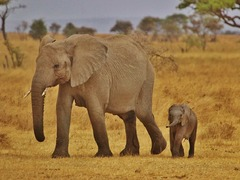 Best National Parks & Wildlife Destinations in Africa