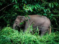 Cambodia: Elephant Conservation + Teaching Children