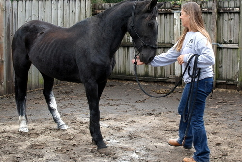 USA: Care for and Rehabilitate Rescued Wild Horses in Florida