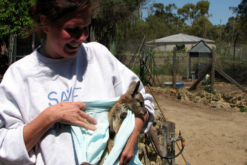 AUSTRALIA: Care for Animals in a Rehabilitation Centre in Perth