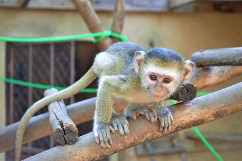Volunteer at a Wildlife Rescue Centre in Malawi