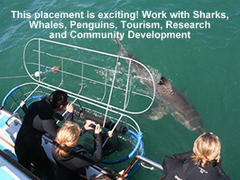 SOUTH AFRICA: Multi-Marine Project with Dolphins, Whales and Sharks, near Cape Town
