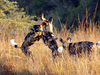 SOUTH AFRICA: Wildlife & Wildlife Reserve Conservation Expedition in KwaZulu-Natal