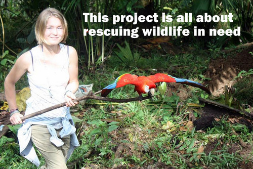 ECUADOR: Wildlife Rescue, Rehabilitation and Release in the Rainforest in Puyo