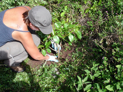ECUADOR: GALAPAGOS ISLANDS: Conservation and Reforestation