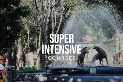 Super Intensive (full immersion) Program