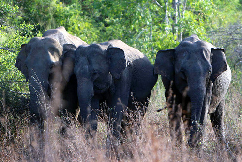 SRI LANKA: Elephant and Wildlife Conservation in Wasgamuwa National Park