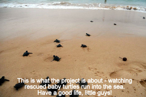 SRI LANKA: Help with Turtle Conservation in Ambalangoda