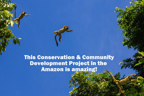 PERU: Hands-on Conservation & Community Development in the Amazon Rainforest