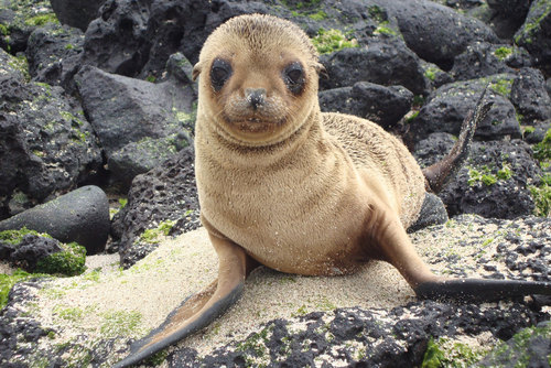 Spanish Immersion & Galapagos Tour