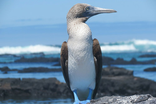 Ultimate Spanish Immersion & Galapagos Tour