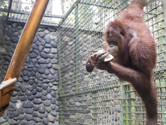 Rainforest Conservation & Wildlife Rescue, Indonesia